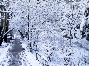 winter, yo