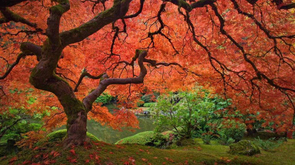 check out them maples...