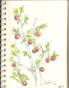 *manzanas*