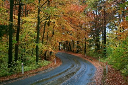 * road to autumn *