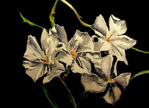 * white oleanders, yo *