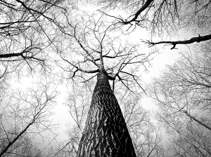 black-and-white-branches-tree-high