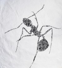 The_Ant._From_the_Dis_-_sectum_project